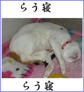 らう寝ねこ.jpg